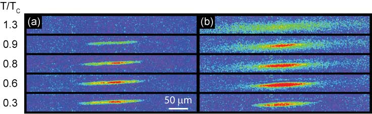 Selective imaging of coherent atoms using superradiance imaging